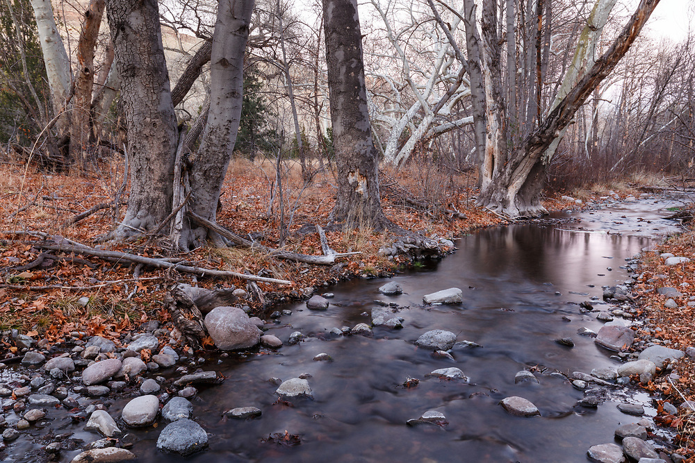 Animas Creek in winter, Ladder Ranch, west of Truth or Consequences, New Mexico, USA.