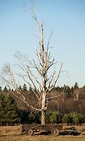 29.10.2014 wies teremiski woj podlaskie N/z woz konny pod drzewem fot Michal Kosc / AGENCJA WSCHOD