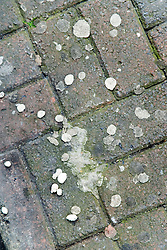 Chewing gum stuck to a pavement,
