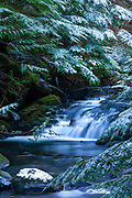 A dusting of snow covers the branches that frame a series of small cascades in Twenty-Two Creek, located in the Lake Twenty Two Research Natural Area in the Cascades of Washington state.