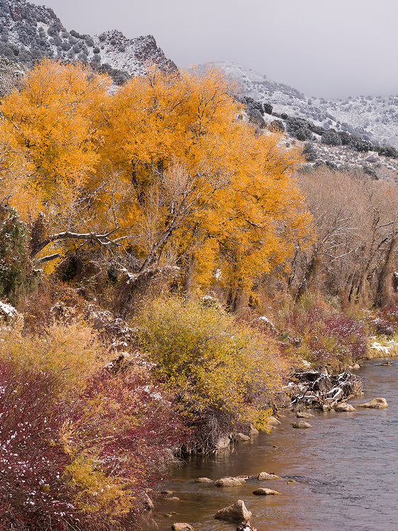 Last of the Autumn Color hangs on near Heise Hotsprings on the South Fork of the Snake River in Eastern Idaho.  Licensing and Open Edition Prints.
