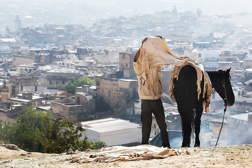A young man lifts up sheep leather skins, coming from the tanneries, from the back of his  horse to set on the ground to dry on a hill overlooking Fes El-Bali, Morocco.