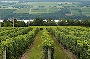 One of the many vineyards that overlook Seneca Lake, NY, Monday, July 29, 2013.<br /> CREDIT: Heather Ainsworth for The Wall Street Journal<br /> FINGERLAKESOD