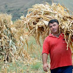 Food, health, agriculture & displaced, Georgia
