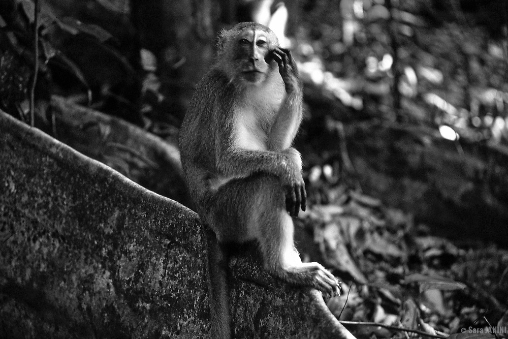 Camp Leaky, Tanjung Puting, Kalimatan, Borneo, Indonesia, Asia