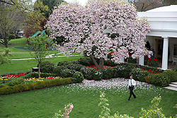 President Barack Obama walks across the Rose Garden of the White House on his way to signing the bill H.R. 2 Medicare Access and CHIP Reauthorization Act of 2015, April 16, 2015. (Official White House Photo by Lawrence Jackson)<br /> <br /> This official White House photograph is being made available only for publication by news organizations and/or for personal use printing by the subject(s) of the photograph. The photograph may not be manipulated in any way and may not be used in commercial or political materials, advertisements, emails, products, promotions that in any way suggests approval or endorsement of the President, the First Family, or the White House.
