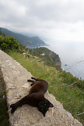 Panoramic view over the costline near Torre Talaia de Ses Animes. Black cat enjoying a warm stone wall.
