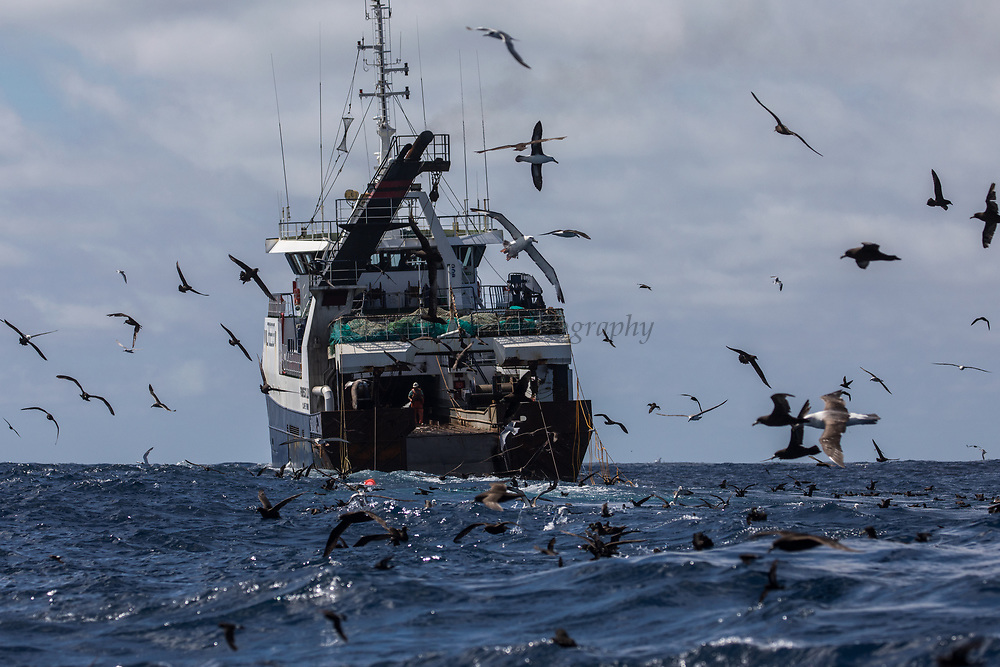 Commercial trawler<br /> South of South Africa<br /> Western Cape<br /> South Africa<br /> 60 miles south of Gansbaai