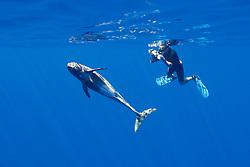 marine wildlife photographer, James D. Watt, photographing pygmy killer whale, Feresa attenuata, Kona, Big Island, Hawaii, USA, Pacific Ocean, Model Released - MR#: 000044