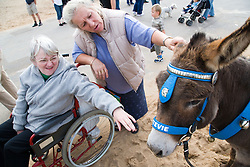 Wheelchair user with Multiple, Sclerosis and her carer stroking a donkey on the beach whilst on a day trip to Skegness organised by Nottingham Disabled Friendship Club,