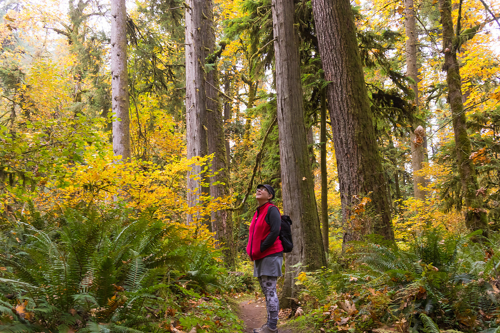 The Old Growth loop trail in Oxbow Regional park on the Sandy River, near Portland Oregon