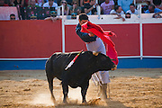 Professional bullfighter Oscar Higares teases a bull during the annual village festival of San Juan in Campos del Rio, near Murcia in southern Spain.  (Oscar Higares is featured in the book What I Eat: Around the World in 80 Diets.) After a dozen more passes, he kills the bull on his first attempt, eliciting a standing ovation from the crowd, which awards him the bull's ears and tail. Oscar and the bull spend just under 15 minutes together in the ring (an anxious period in which Oscar must control not only the objective dangers, but also his fear).  Each bullfight ends with the killing of the bull by the matador (bullfighter).MODEL RELEASED.