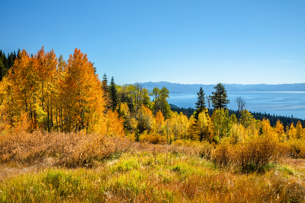 """""""Aspens Above Lake Tahoe 15"""" - Photograph of yellow and orange aspen trees in the Fall at a grove above Lake Tahoe."""