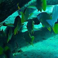 Schoolmaster, Oro Verde, Shipwreck, Grand Cayman