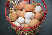 """Fresh eggs the students at Lorenzo De Zavala Environmental Science Academy collected from their chicken coop in Grand Prairie, Texas on October 7, 2016. """"CREDIT: Cooper Neill for The Wall Street Journal""""<br /> PUBLICS"""