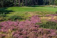LEUSDEN  -  hole 8 met bijenkisten, Golfclub de Hoge Kleij  COPYRIGHT KOEN SUYK