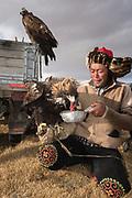 Kazakh eagle hunter feeding his eagle<br /> Mongolia's largest ethnic minority<br /> Altai Mountains<br /> Western Mongolia