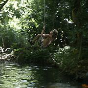 Hiking and kayaking on Maui includes a rope swing into water.