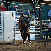 Tristan Hutchings on Red Eye Rodeo Bull Wiggly Worm at the Darby MT Elite Proffesionals Bull Riding Event July 7th 2017.  Photo by Josh Homer/Burning Ember Photography.  Photo credit must be given on all uses.