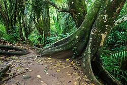 Jungle trail near Manuel Antonio National Park, Costa Rica.