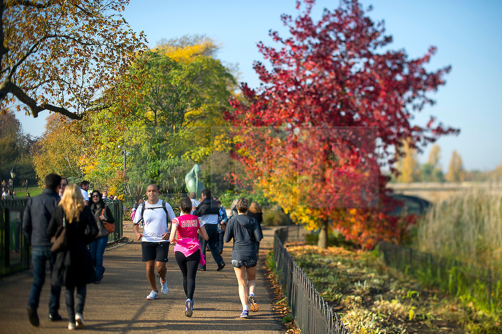 © Licensed to London News Pictures. 01/11/2015. London, UK. Joggers pass a tree displaying a full rage of autumn colours, from green through to deep red, in Hyde Park, Central London.  Photo credit: Ben Cawthra/LNP