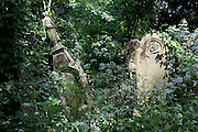"Overgrown tomb and gravestones are covered by ivy undergrowth in Nunhead Cemetery whose deceased occupants were important members of society from the industrial age. On the left is a memorial ('With loving memory of Charlotte Catherine, the beloved wife .."") including an angel figure that leans over at an angle, probably caused by tree roots or perhaps by vandalism during the 50s and 60s when this land was left open for youngsters to commit criminal damage to stonework and carvings. During the cemetery's annual open day, there is an opportunity for the of the cemetery 'Friends' (society) to celebrate and educate Londoners, old and young, to help preserve and conserve this historic site."