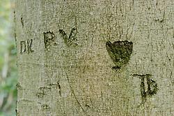 Tree carving, Vegraffiti, Graffiti tree, beschreven bomen
