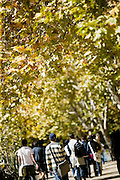 Students walking along pathway under fall (autumn) leaves at Macquarie University, Sydney, Australia