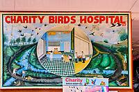 Inde, Delhi, quartier de Chawri Bazar, le Charity Bird Hospital qui vient au secour des oiseaux blessés // India, Delhi, New Delhi, Chawri Bazar district, Charity Bird Hospital which comes to the rescue of injured city birds
