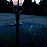 Close-up of a street light at garden