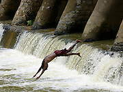 A local man dives into a river from a damduring the monsoon season near Goa, India