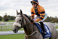 Josephine Gordon and MAJOR JUMBO on their way to the start before winning The Coral Sprint Trophy over 6f (£100,000) during the October Finale meeting at York Racecourse, York, United Kingdom on 13 October 2018. Pic Mick Atkins