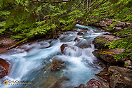 Avalanche Creek in Glacier National Park, Montana, USA