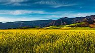 Spring in Ojai.