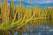 Wetland on the Dempster Highway (KM 210 - 215), Dempster HIghway, Yukon, Canada