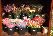 Bunches of flowers for sale by the roadside, Guernsey