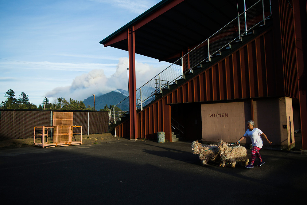 Sept. 13, 2017 | Volunteer Pam Seaman walks angora goats at a Red Cross evacuation site in Stevenson, WA across the river from the Eagle Creek Fire in the Columbia River Gorge in Oregon