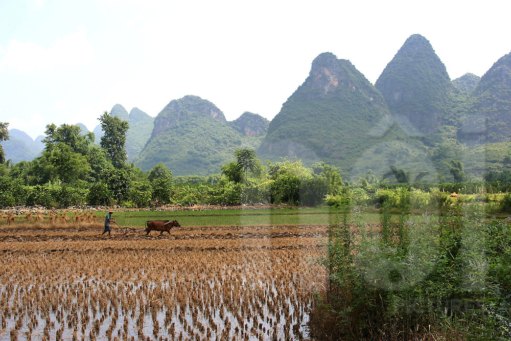 Farmer working in his rice field. Area of Yangsho's countryside