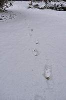 Footsteps in the Snow. Autumn Backyard Nature in New Jersey. Image taken with a Leica T camera and 11-23 mm lens (ISO 400, 16.5 mm, f/5.6, 1/1600 sec)