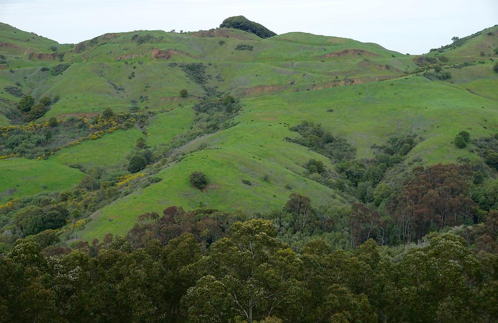 Green hillsides from Finley Botanical Gardens, Berkeley, California