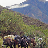 Horses pack an archaeology expedition into the Andes.