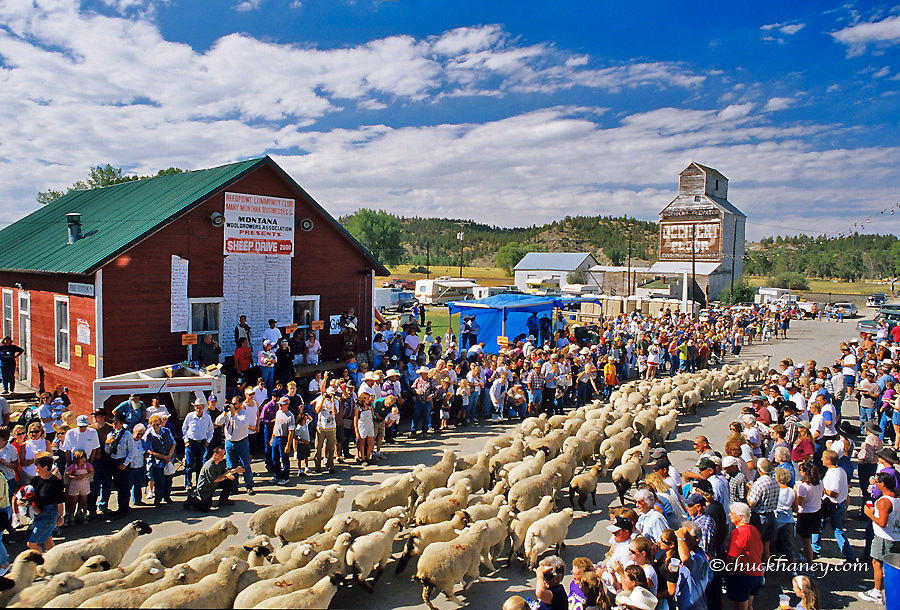 Annual Sheep Drive in Reedpoint, Montana, USA