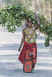 Woman Carrying Vegitation On Her Head