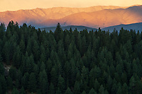 Forest at sunset near lake Pukuaki, South Island, New Zealand.