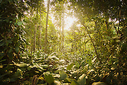 Jungle vegetation, Odzala-Kokoua National Park.