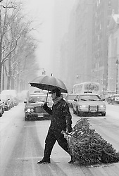 Man crossing a New York City Street In A Snow Storm Dragging A Cut Christmas Tree