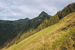 THEMENBILD - ein Berghang und Nadelbäume in der Morgensonne, dahinter der Tristkogel, aufgenommen am 13. August 2020, Saalbach Hinterglemm, Österreich // a mountain slope and coniferous trees in the morning sun, behind it the Tristkogel on 2020/08/13, Saalbach Hinterglemm, Austria. EXPA Pictures © 2020, PhotoCredit: EXPA/ Stefanie Oberhauser
