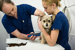 A pet dog is held and comforted by a veterinary nurse during a procedure at Rushcliffe Veterinary Centre, West Bridgford, Nottingham, UK.<br />