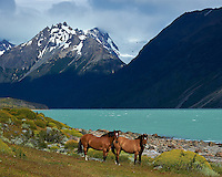 Pair of Horses at Estancia Helsingfors in Patagonia. Image taken with a Nikon D3s and 24-120 mm f/4 lens (ISO 200, 85 mm, f/8, 1/1000 sec).