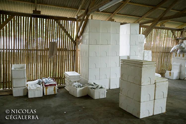 Materiel d'exportation des poissons d'aquarium pour l'Europe, l'Amérique du Nord et le Japon<br /> <br /> Mission Banggai Cardinal Fish, Mai 2008, Act for Nature - Musee oceanographique de Monaco